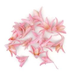 Szárazvirág alapanyag - csillag lili (rózsaszín)