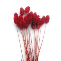 Szárazvirág alapanyag - fénymag piros színben