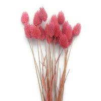 Szárazvirág alapanyag - Fénymag (rózsaszín)