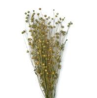 Száazvirág alapanyag - Len (natúr)