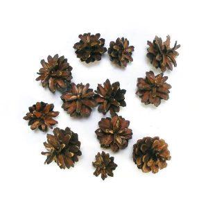 erdeifenyo-toboz-natur