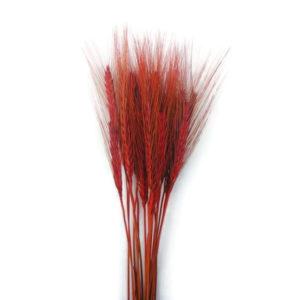 Szárazvirág alapanyag búza (piros)