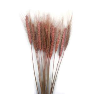 Szárazvirág alapanyag - búza (rózsaszín)