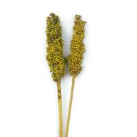 Szárazvirág alapanyag - cirok (sárga)