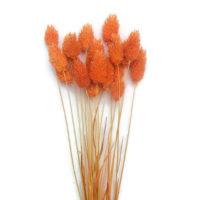 Szárazvirág alapanyag - Fénymag (narancs)