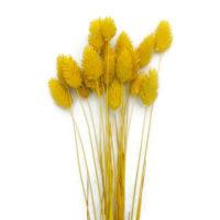 Szárazvirág alapanyag - Fénymag (sárga)