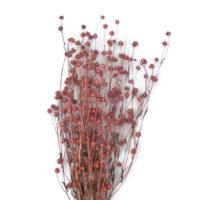 Szárazvirág alapanyag - Len (rózsaszín)