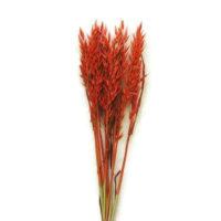 Szárazvirág alapanyag - zab piros színű