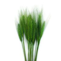 Szárazvirág alapanyag - búza (zöld)