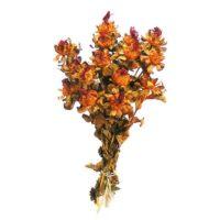 safrany-narancs