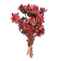 safrany-piros