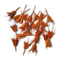 koronas-nigella-narancs