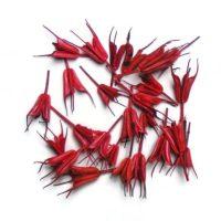 koronas-nigella-piros