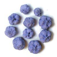 fokhagyma-termes-lila